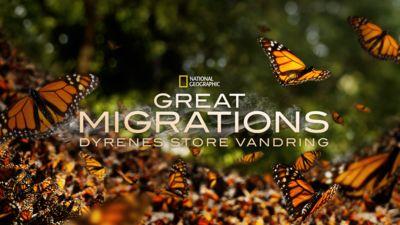 Great Migrations: Dyrenes store vandring