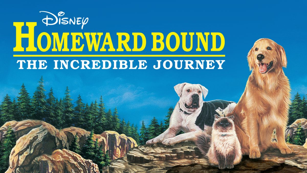 Watch Homeward Bound: The Incredible Journey | Full Movie | Disney+