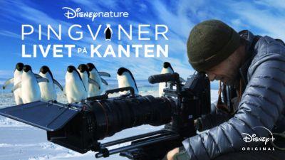 Pingviner: Livet på kanten